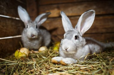 Young rabbits in a hutch