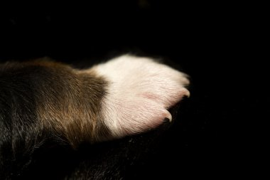 Cub paw placed on mother black fur
