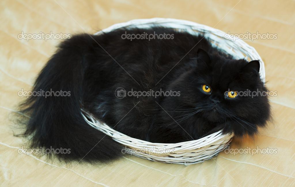 libra černá kočička video porno brasil