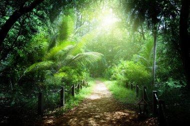 Way in jungle of Seychelles islands stock vector