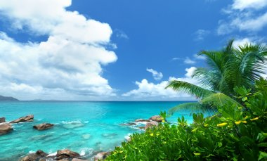 sea and tropical plants on La Digue island in Seychelles