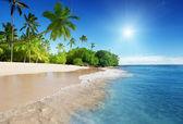 Karibské moře a palmy