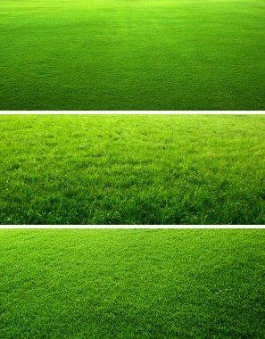 Green grass backgrounds stock vector