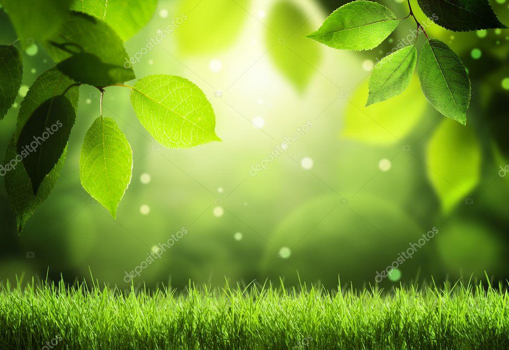Фотообои Весенний лес фон