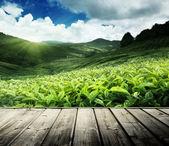 Fotografia pavimento in legno in piantagione di tè altopiani di cameron, Malesia