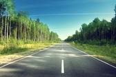 strada nella foresta estate