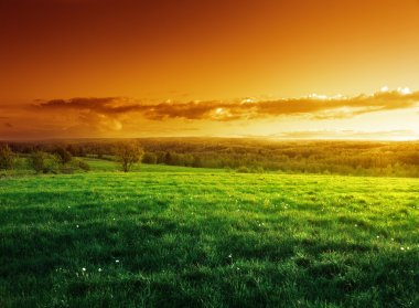 field of spring grass in sunset time