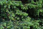 Luc fa közelről. Karácsonyi háttér