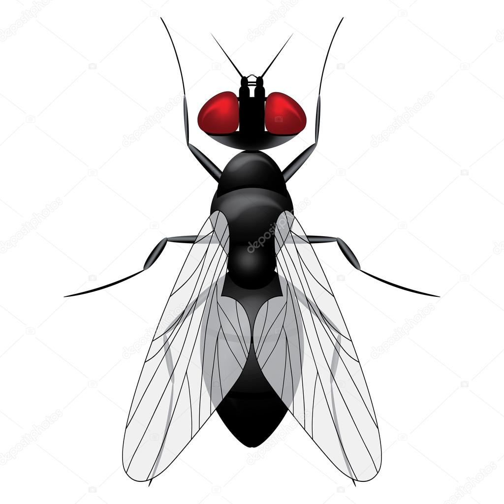 Fly insect sketch symbol