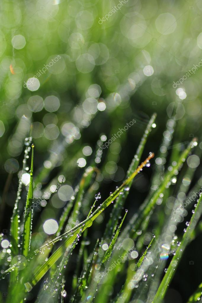 Abstract background morning dew