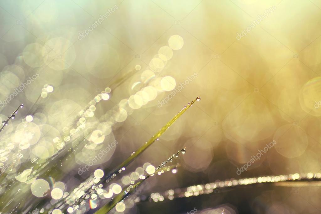 background of shining a bright morning dew