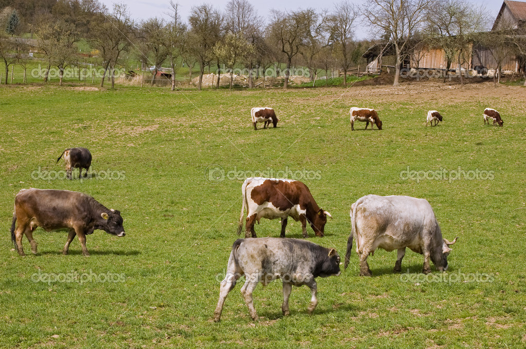 Фотообои Meadow with Cows