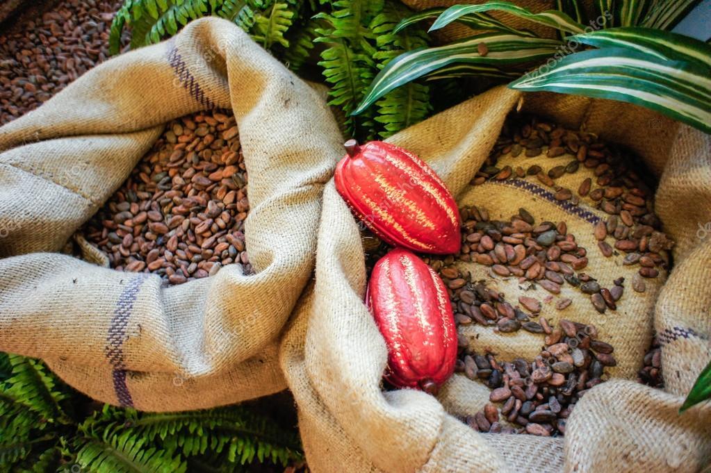 Cocoa Beans and Fruits