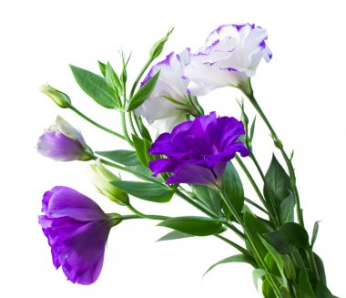 Bouquet of eustoma flowers isolated on white stock vector