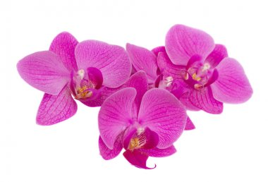 Pile of orchids