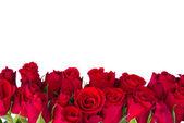 Fotografie Grenze aus frischen roten Rosen Garten