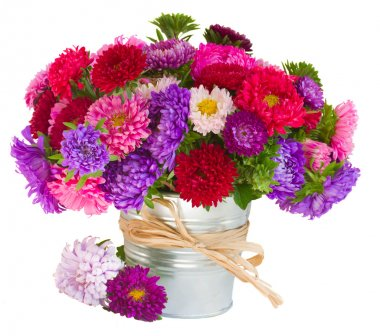 Bouquet of aster flowers in pot