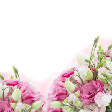 Bunch of pink eustoma flowers isolated on white background stock vector