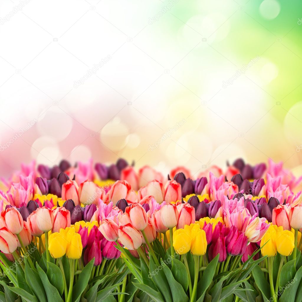 Spring tulips on colofful bokeh