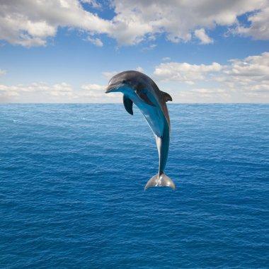 Single  jumping dolphin