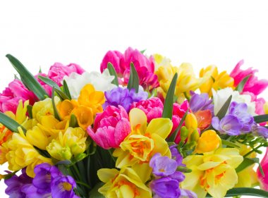 Freesia and daffodil  flowers  border