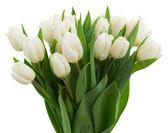 Fotografie banda bílé tulipány