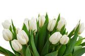Fotografie banda bílých tulipánů zblízka