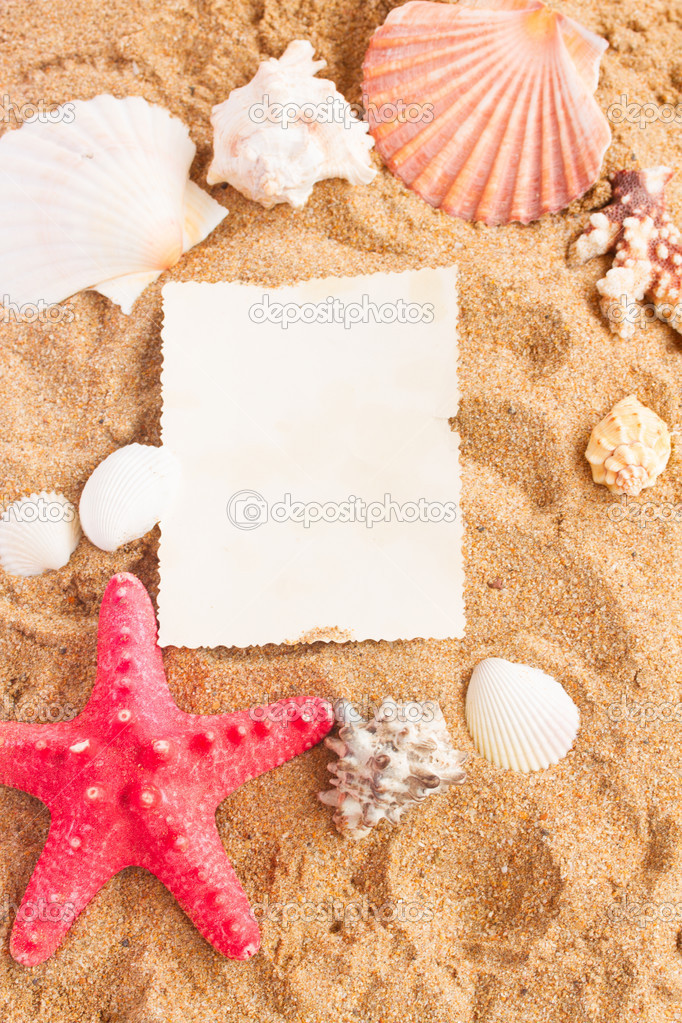 marco de conchas de ans de estrella de mar sobre la arena — Fotos de ...