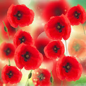 pole máku květin