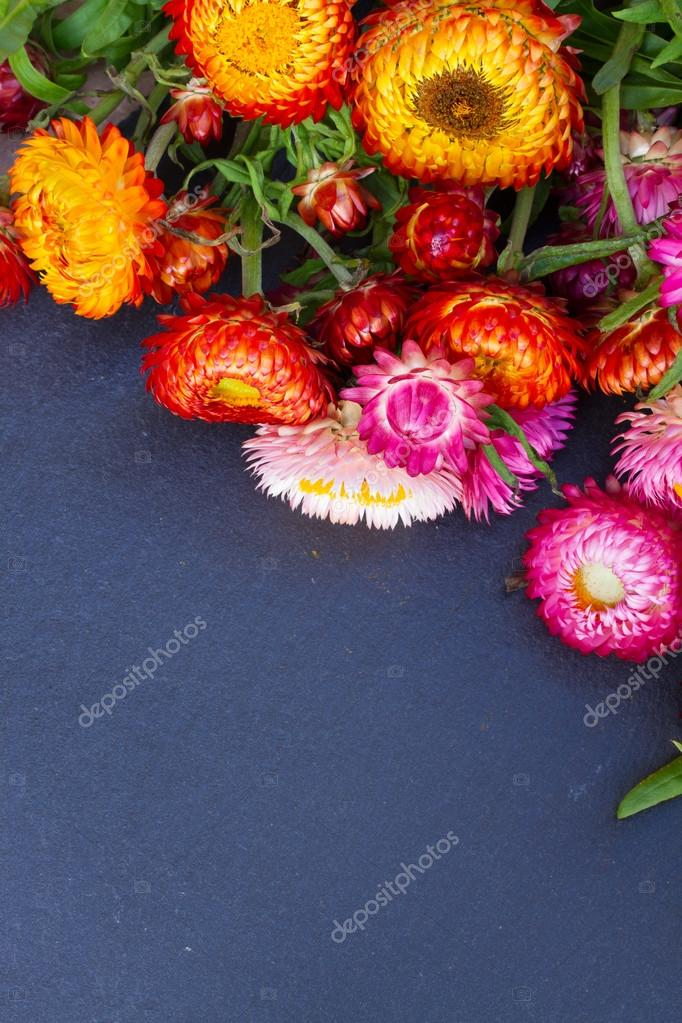 Bouquet of Everlasting flowers