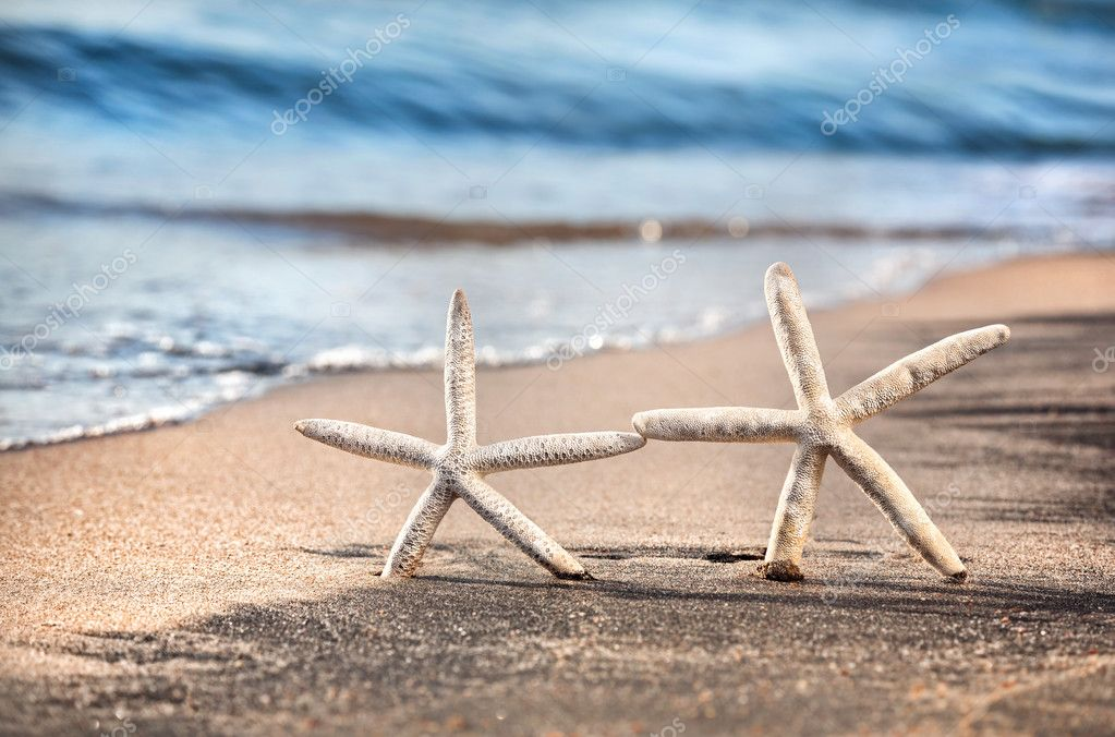 Starfish love