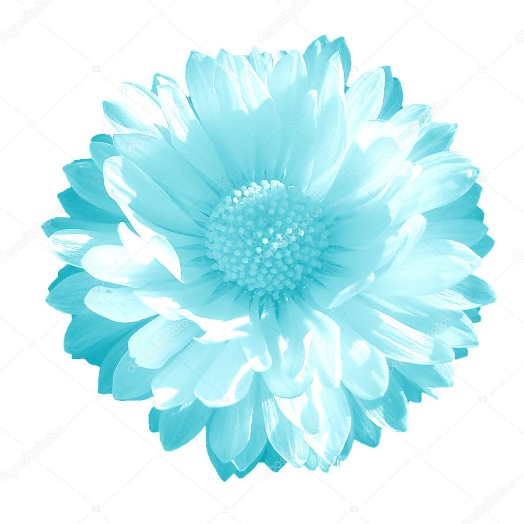 Clear blue flower on a white background stock photo arti19 31358763 clear blue flower on a white background photo by arti19 izmirmasajfo
