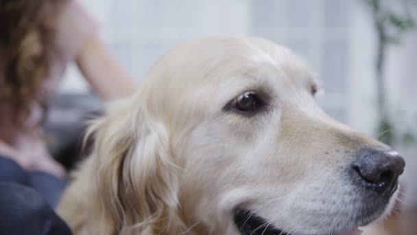 Loveable family dog in close up