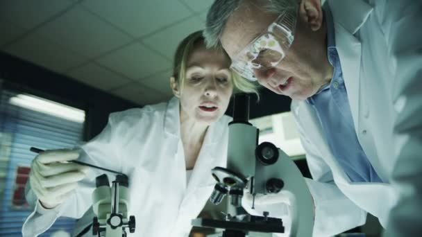 Male and female research experts working in laboratory