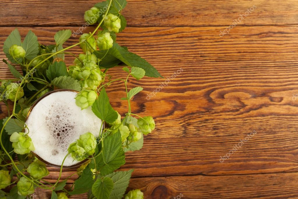 Pint and hop plant