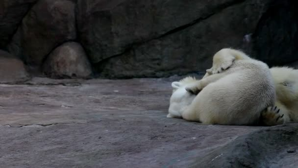 polar bears in zoo