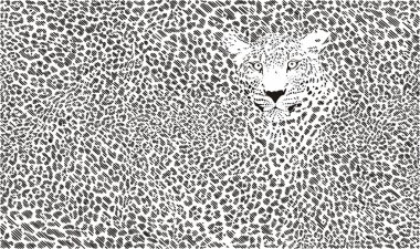 Jaguar skin background