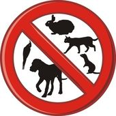 žádné domácí zvířátko v této oblasti zakázáno