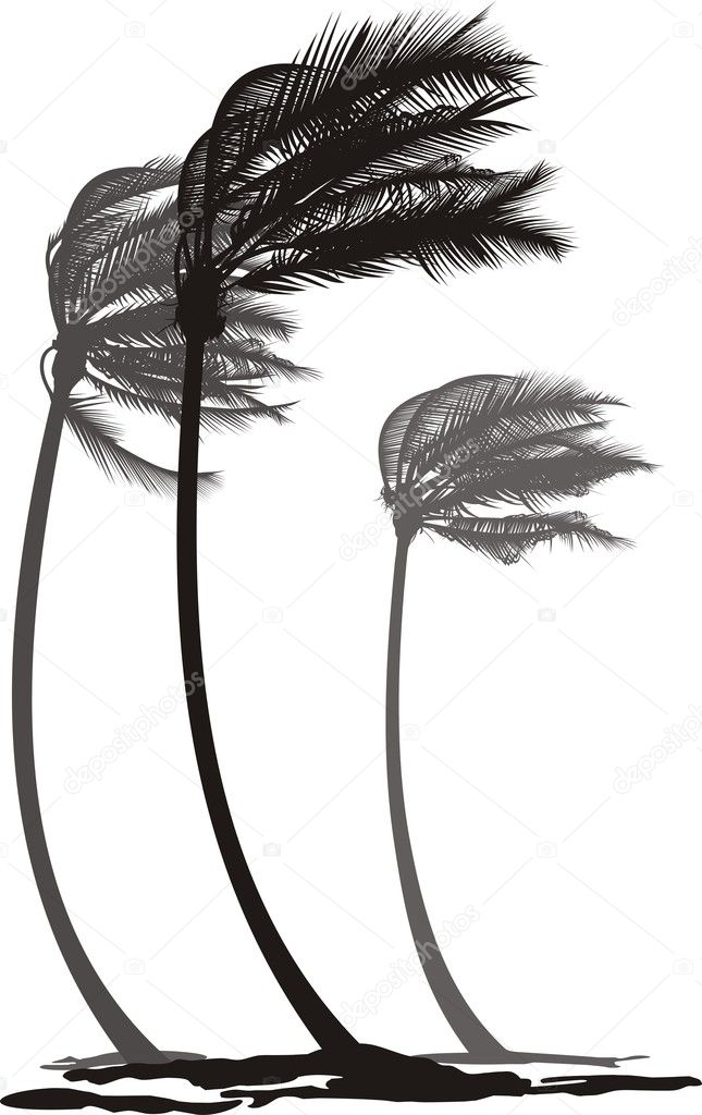 Palms in the wind