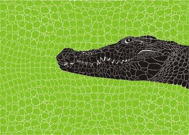 Pattern crocodile background