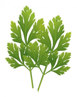 vector parsley