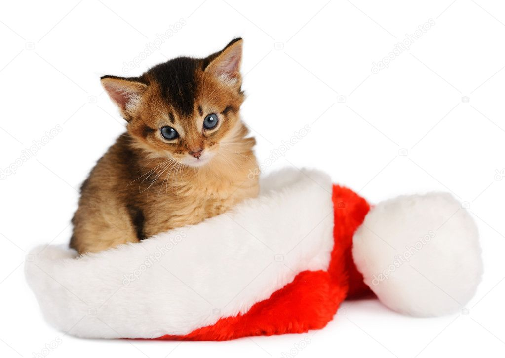 Áˆ Merry Christmas Cat Stock Photos Royalty Free Christmas Cat Images Download On Depositphotos