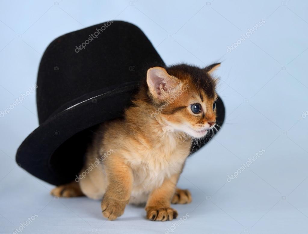 ładny Kot Somalijski W Kapeluszu Zdjęcie Stockowe Nelik 36728989