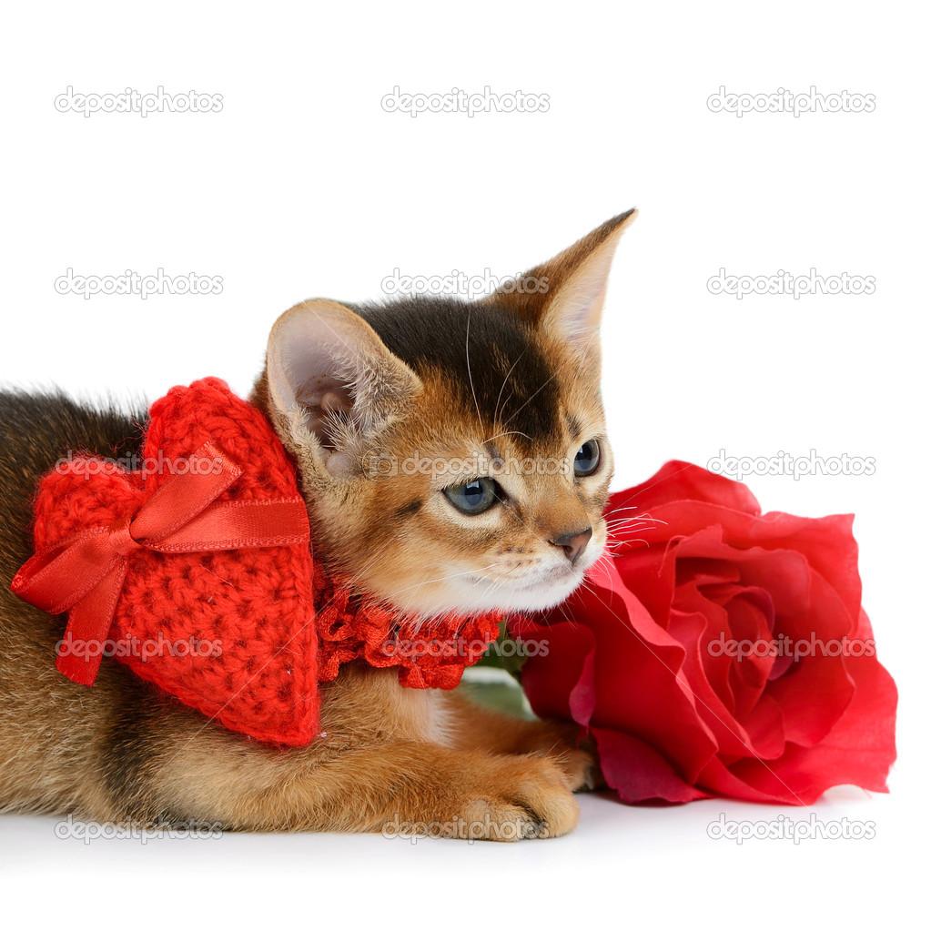 круглогодичный, кроме валентинки с котятами фото каждом случае