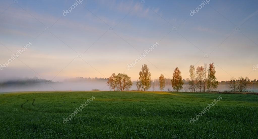 Фотообои Туманный Пейзаж. Ранним Утром Туман.