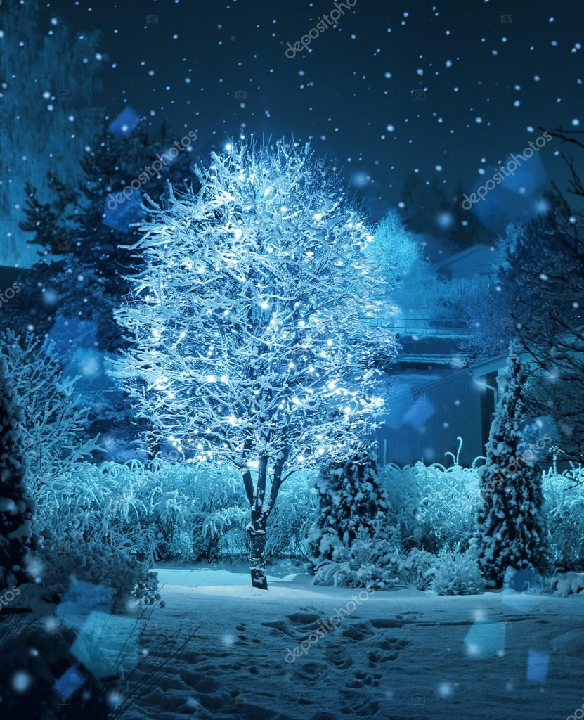 Illuminated tree winter garden snowfall fantasy