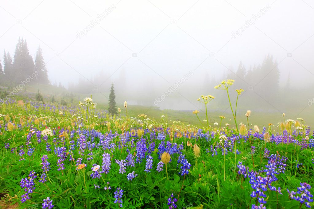 Beautiful wild flowers field with lake in the mountains with trees.