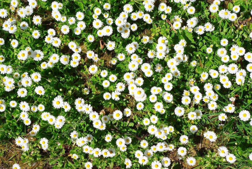 Spring ground cover in the park with white flowers stock photo spring ground cover in the park with white flowers stock photo mightylinksfo