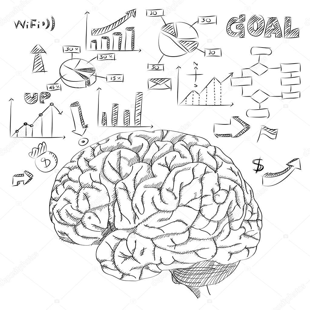 el cerebro humano con el diagrama de infografía para contorno de ...