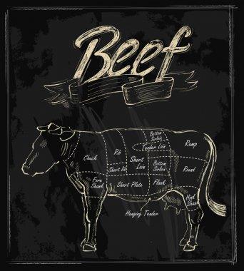 Vector hand drawn beef
